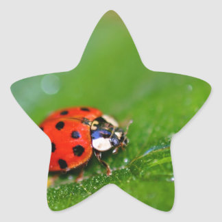 Lady Bug Star Sticker