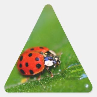 Lady Bug Triangle Sticker