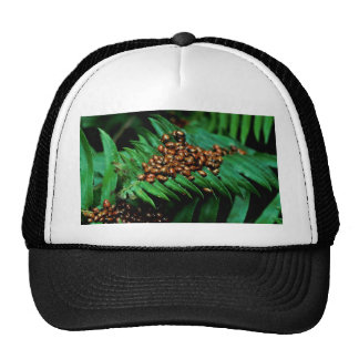 Lady Bugs Mesh Hats