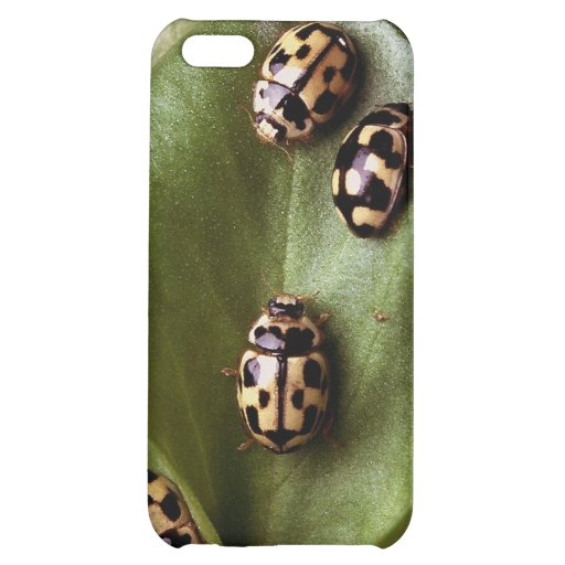 Lady bugs ! iPhone 5C cases
