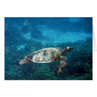 Lady Elliot Island Sea Turtle Cards