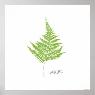 Lady Fern Illustration |  Fern Botanical Print