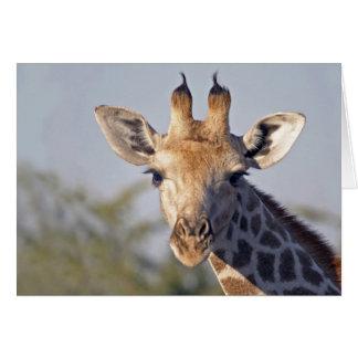 Lady Giraffe Note Card