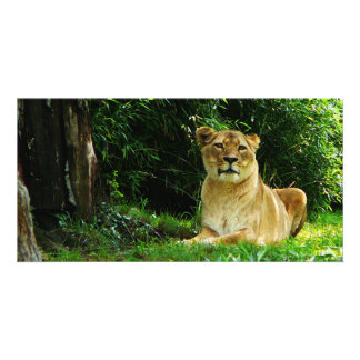 Lady Lion Relaxing Personalized Photo Card