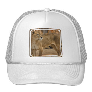 Lady Lioness Baseball Hat