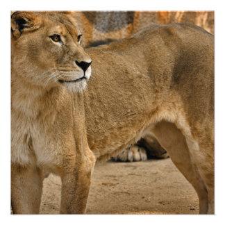 Lady Lioness Invitations
