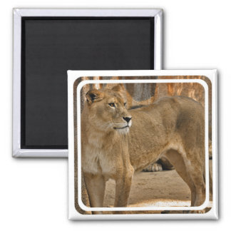 Lady Lioness Magnet  Magnet