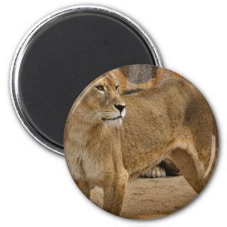 Lady Lioness Magnet Refrigerator Magnet