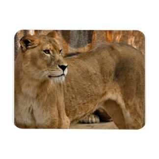 Lady Lioness Premium Magnet Magnet