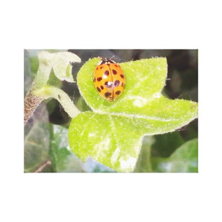 Lady nose ladybird pressure on wedge canvas