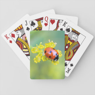 lady on top playing cards