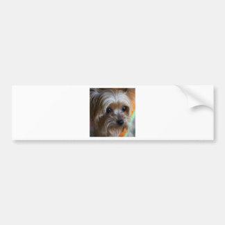 Lady Yorkshire Terrier Bumper Sticker