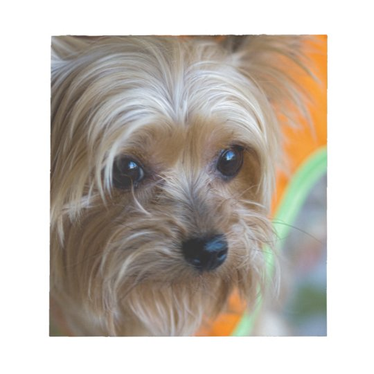 Lady Yorkshire Terrier Puppy Notepad