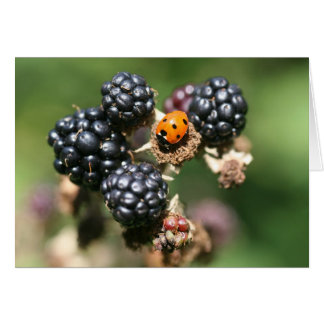 Ladybird and Blackberries Card
