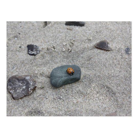 Ladybird beach postcard