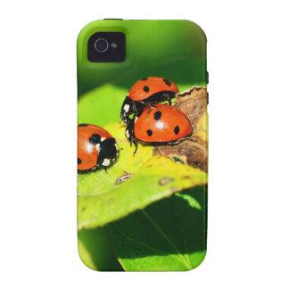 Ladybird iPhone 4 Cover