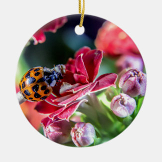Ladybird Christmas Ornament
