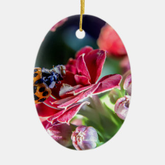 Ladybird Christmas Ornament