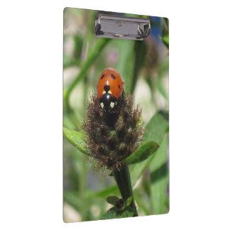 Ladybird Clipboard