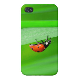 Ladybird Cover For iPhone 4