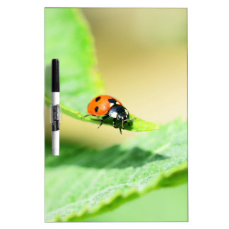Ladybird Dry-Erase Boards