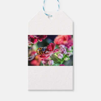 Ladybird Gift Tags