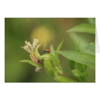 Ladybird greetings card