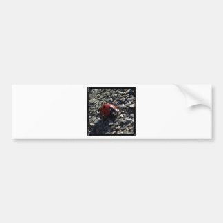 Ladybird image bumper sticker