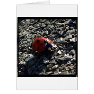 Ladybird image card