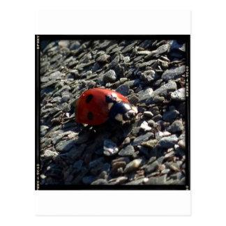 Ladybird image postcard