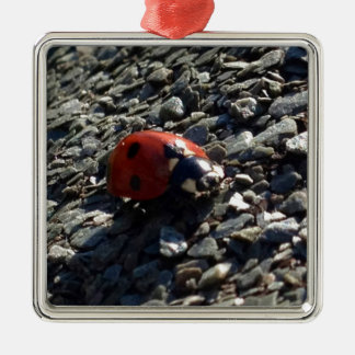 Ladybird image Silver-Colored square decoration