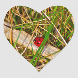 Ladybird in the grass picture heart sticker