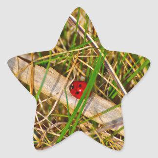 Ladybird in the grass picture star sticker