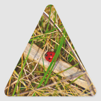 Ladybird in the grass picture triangle sticker