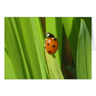 Ladybird Insect Colour Photo Image Greeting Card