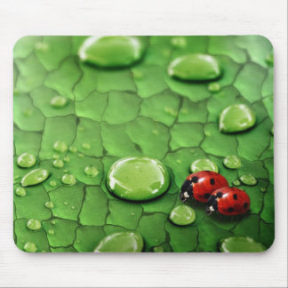 ladybird mouse pad