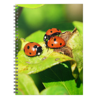 Ladybird Note Books