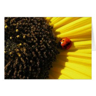 Ladybird on a sunflower cards