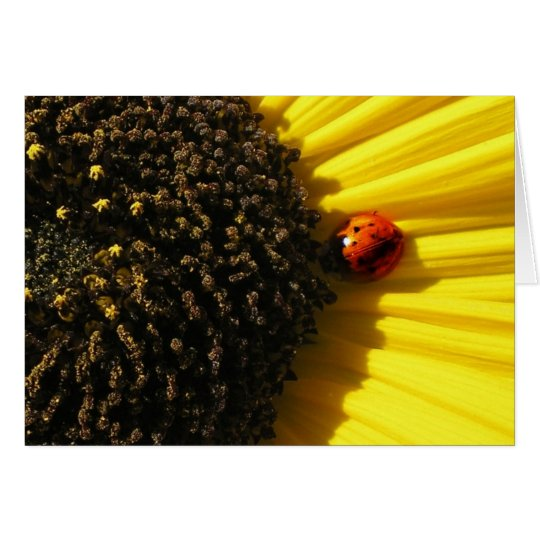 Ladybird on a sunflower card