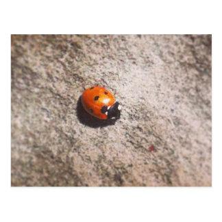 Ladybird on a wall postcard