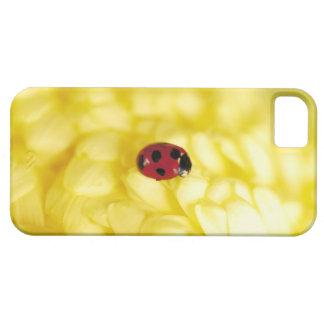 Ladybird on a yellow chrysanthemum iPhone 5 cover