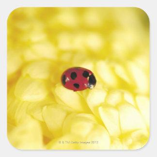 Ladybird on a yellow chrysanthemum square sticker