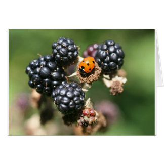 Ladybird on Blackberries Card