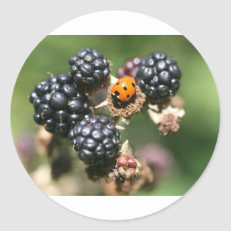Ladybird on Blackberries Classic Round Sticker