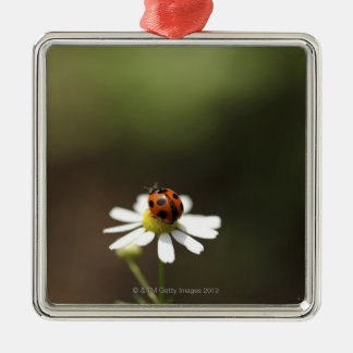 Ladybird on Chamomile Flower Christmas Ornament