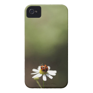 Ladybird on Chamomile Flower iPhone 4 Cases