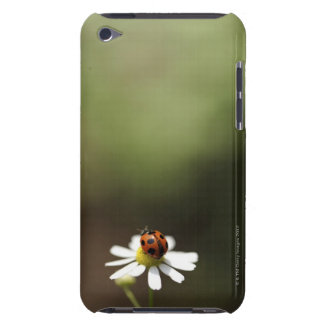 Ladybird on Chamomile Flower iPod Touch Covers