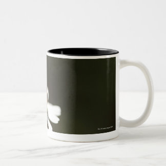 Ladybird on Chamomile Flower Two-Tone Coffee Mug