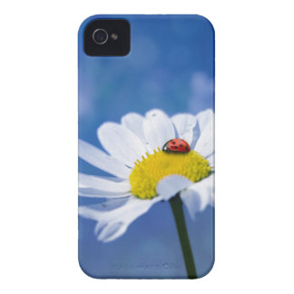 Ladybird on daisy iPhone 4 Case-Mate case