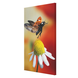 ladybird on flower 2 canvas print